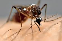 RESIDENTS REMINDED TO HELP PREVENT MOSQUITO BREEDING