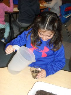 This first-grade student at Cherry Lane Elementary School is adding water to a clear plastic container that consists of rye grass seeds and potting soil. It was expected that in five to seven days, the seeds would sprout roots and grow hair-like stems.