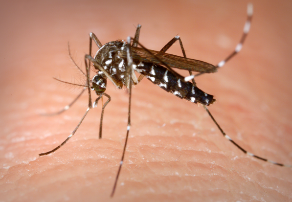 HEALTH DEPARTMENT OFFERS FREE MOSQUITO CONTROL PRODUCTS