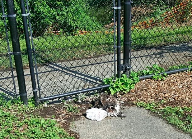 ACTION REQUESTED PLEASE: Clean-up of Spring Valley Park ASAP (dead animals, drugs and defecation)