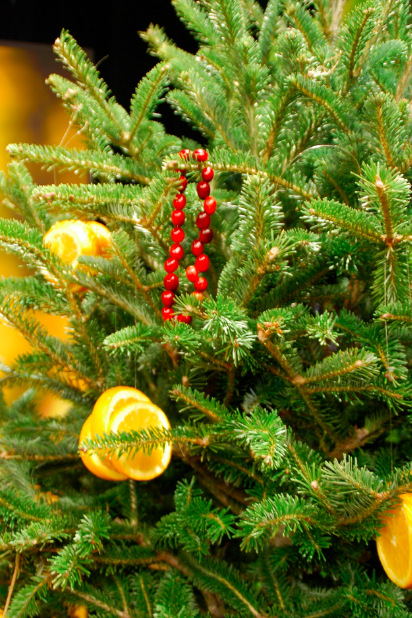 Give Your Christmas Tree a Second Life in the Landscape